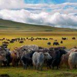 Hình ảnh nguồn hàng Vòng tay từ Sừng bò Tây Tạng giá sỉ quảng châu taobao 1688 trung quốc về TpHCM